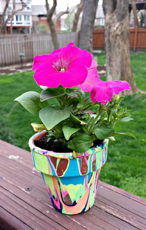 pourpotflower