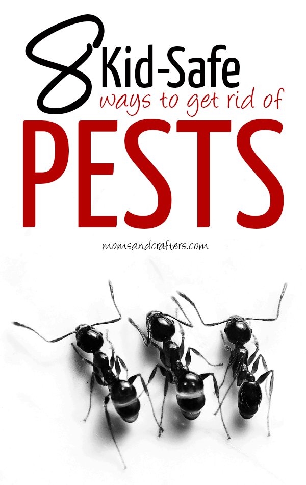 Most commercial pesticides are NOT safe around kids but these commercial and DIY kid safe pest control solutions are! Click to find out what they are