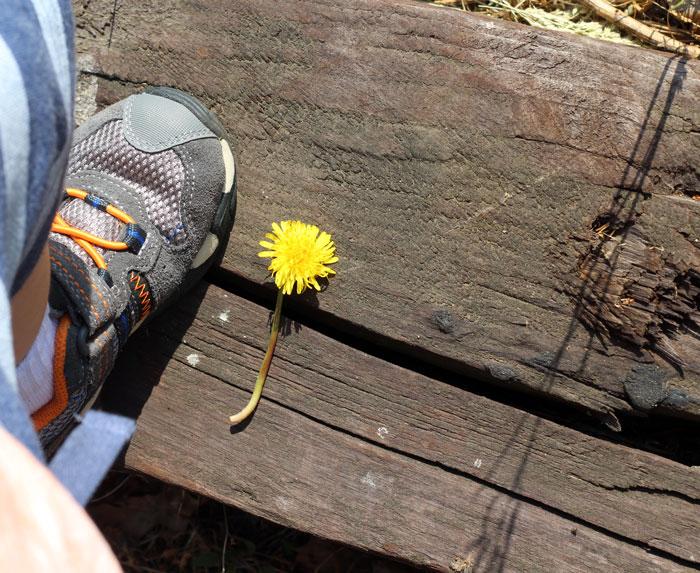 outdoor-activities-for-toddlers-dandelion