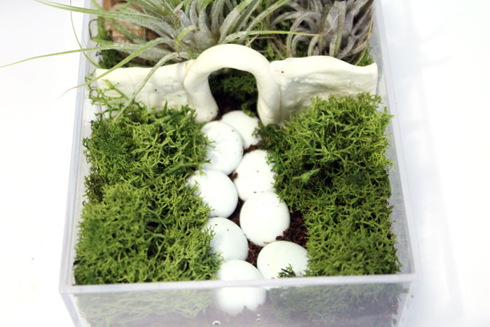 Make a beautiful and simple easy indoor fairy garden terrarium! You'll want to shrink and step right inside this perfect craft for teens, for autumn, winter, and cold weather.