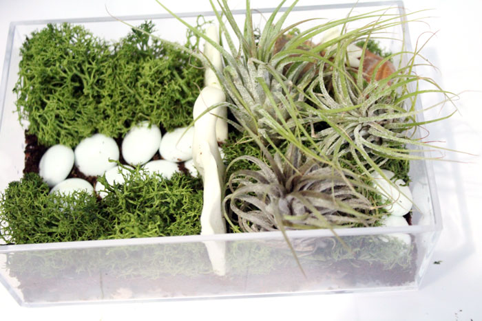 Make A Beautiful And Simple Easy Indoor Fairy Garden Terrarium! Youu0027ll Want  To