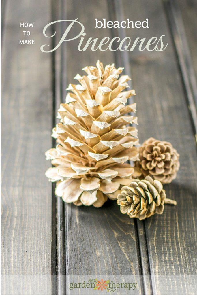 make-these-stunning-bleached-pinecones-with-these-tips-683x1024