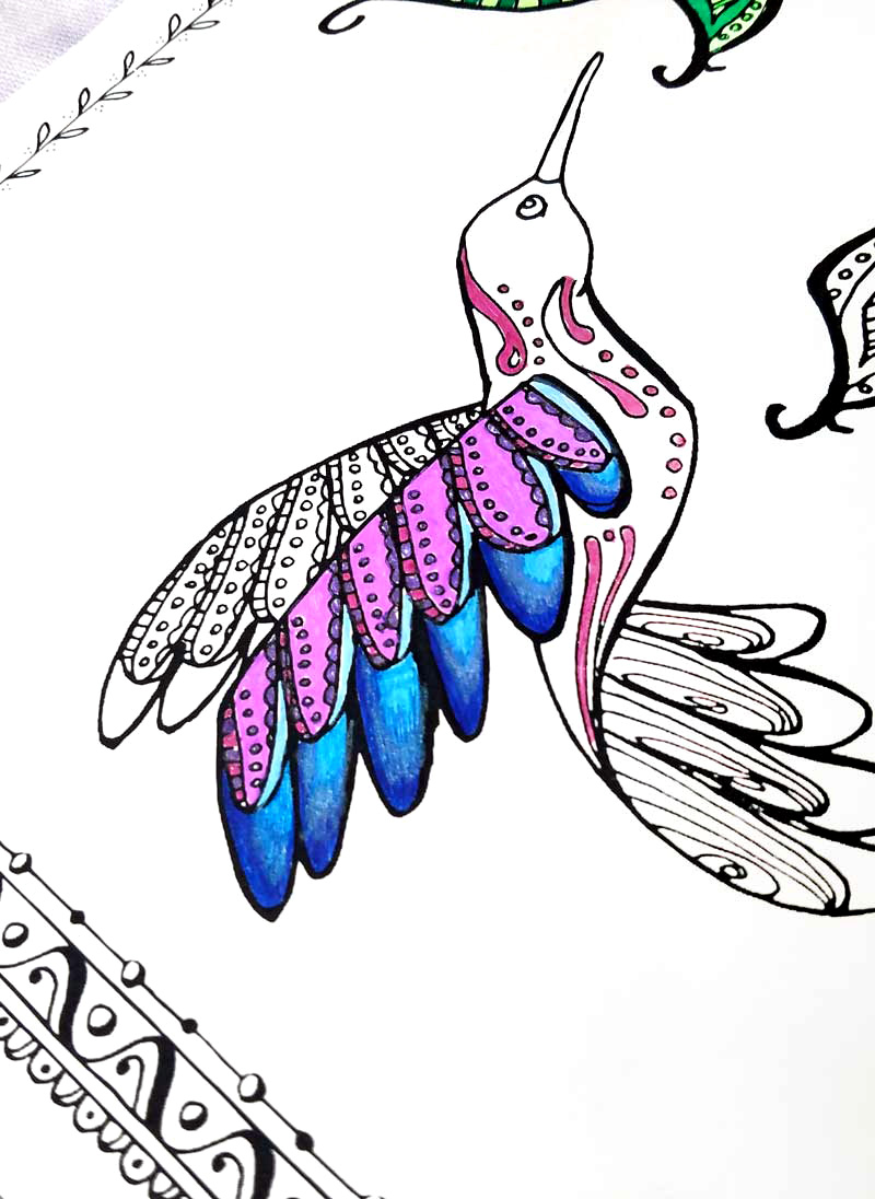 click the black chinned hummingbird coloring pages rufous