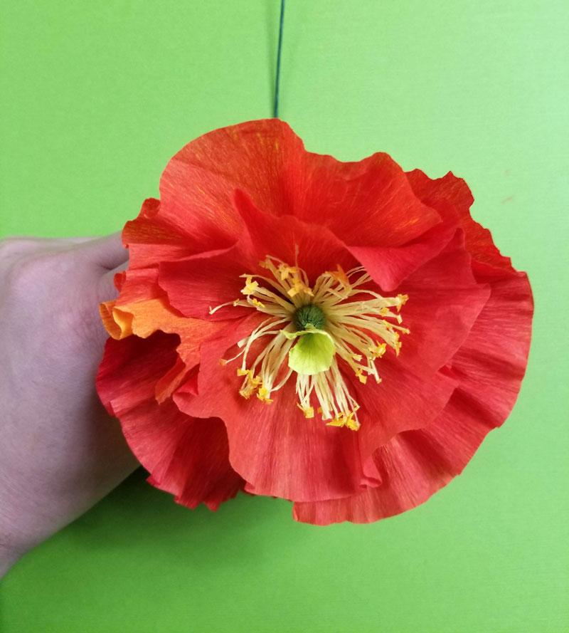 Crepe paper icelandic poppy